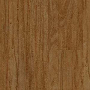 Infinite - Cypress Pine