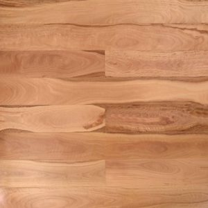 Pacific Blackbutt